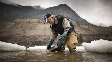 Gold miner George Vanderwolf pans for gold in the Fraser river as ice and snow float by in Lillooet November 13, 2012. (John Lehmann/The Globe and Mail)