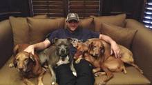 Mark Buehrle's dogs – pit bull Slater, second from left, and Vizslas Drake, Duke and Diesel – are staying with his family in the St. Louis area. (HANDOUT)