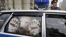 A Greenpeace activist, dressed as a polar bear, sits inside a police car after being detained outside Gazprom's headquarters in Moscow, Sept. 5, 2012. Russian and international environmentalists are protesting Gazprom's plans to pioneer oil drilling in the Arctic. (MISHA JAPARIDZE/AP)