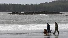 A couple walks dogs along Middle Beach in Tofino, B.C., on Nov. 13, 2008. British Columbia cities and towns, such as Tofino, are taking their fight to regulate short-term vacation rentals to an aggressive new level. (DARRYL DYCK/THE CANADIAN PRESS)