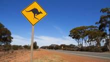 Roughly 70,000 kangaroos are believed to live on Kangaroo Island in South Australia. (Thomas Kilpatrick/Thinkstock)