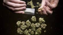 A medical marijuana rolls a joint of BC bud in Vancouver November 8, 2012. (John Lehmann/The Globe and Mail)