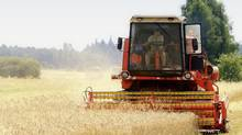 Historically, commodities such as wheat can cushion portfolio losses when other asset classes dive (and dampen the gains when these classes soar). (iStock)