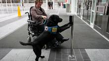 Rebekah Garriock's assistance dog Piper, a 4-year-old black labrador retriever, presses a switch to open an automatic door as she returns to her job at Port Metro Vancouver after taking a walk in Vancouver, B.C., on Thursday December 13, 2012. (DARRYL DYCK For The Globe and Mail)