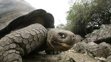 More than two-thirds of Americans gave their 'ideal lifespan' as between 79 and 100 years old, not the 150 years that giant tortoises can live. (GUILLERMO GRANJA/REUTERS)