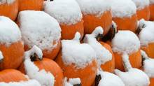 A field of snow-covered pumpkins in Waidring in the Austrian province of Tyrol. (Kerstin Joensson/Associated Press)
