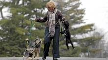 Johanne Tassé walks her dogs (Christinne Muschi/Christinne Muschi for The Globe and Mail)