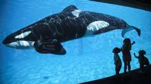 A killer whale at SeaWorld in San Diego. Amid falling attendance, the company has began to cut ticket prices. (MIKE BLAKE/REUTERS)