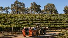 In Sonoma, Grape Camp enlightened us about the effort and passion that goes into a glass of wine.