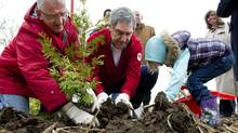 Liberal Leader Michael Ignatieff plants a tree with the help of four-year-old Charlie Marshall and candidate Lui Temelkovski, Sunday, May 1, 2011 in Markham, Ont. (Paul Chiasson/ The Canadian Press/Paul Chiasson/ The Canadian Press)
