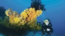 Scuba diving off the Four Seasons Explorer boat in the Maldives. (Adam Broadbent)