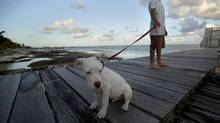 """John McAfee's dog named """"Soltan"""" and a security guard stand on a deck in front of the beachside entrance to the home of software company founder in Ambergris Caye, Belize, Thursday Nov. 15, 2012. Software company founder John McAfee, who has been identified as a """"person of interest"""" in the killing of his neighbour, 52-year-old Gregory Viant Faull, allegedly over a dispute about McAfee's dogs. (Moises Castillo/AP)"""