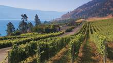 The story of CedarCreek is rooted in the vision of Senator Ross Fitzpatrick. Born and raised in the Okanagan, he worked his way through university in the orchards and fruit packing houses that dotted this valley. Today under his son Gordon's leadership CedarCreek has raised the bar on producing wine. (Handout/Handout)