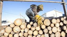 Samuel Metat moves firewood which he sells to residents in Attawapiskat, Ont., Tuesday November 29, 2011. Prices for firewood range from $150-$200 per cord. (Adrian Wyld/The Canadian Press)