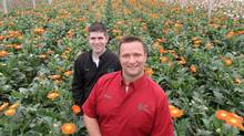 Ralph DeBoer, right and Joshua Bulk of Rosa Flora stand among some of their 110 varietals of Gerbera. (Glenn Lowson For The Globe and Mail)