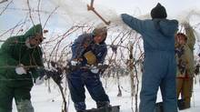 Erie Shore Vineyard is in Harrow, Ont., about 40 km south of Windsor.