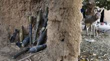 Rocket-propelled grenades believed to belong to Islamist rebels are stockpiled next to a donkey in a courtyard in Diabaly Jan. 23, 2013. (Joe Penney/Reuters)