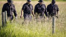 Police investigators comb a hay field north of Airdrie, Alta., Saturday, July 5, 2014, looking for clues to the disappearance of three people. (Jeff McIntosh/The Canadian Press)