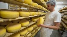 Shep Ysselstein's artisanal cheese has stimulated his family farm business, not to mention his own interest in his surroundings. 'The cows never talk to you and it can get pretty lonely being around them all day long,' he says. (Geoff Robins/The Globe and Mail)