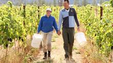 Heleen Pannekoek and Rolf de Bruin left careers in banking and consulting to grow grapes. (Brad Kasselman/www.coastphoto.com)