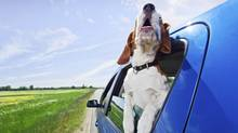 Keep your dog restrained in the back of your car. You'll avoid a fine for careless driving and keep your pooch safer too. (Getty Images/iStockphoto)