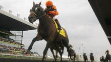 Strait of Dover with jockey Justin Stein in the irons wins the 153rd running of the Queen's Plate horse race aboard Strait of Dover in Toronto, June 24, 2012. Trainers make most of their money from a share of a race's prize purse. (SUE STEEDMAN/REUTERS)