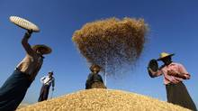 Jeremy Grantham argues that food production might have to double by mid-century to feed everyone even at a modest level. Farmers scatter rice to clean it after collection from a field at Naypyitaw in this Jan. 26, 2012, file photo. (Soe Zeya Tun/Reuters)