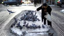 An unidentified woman feeds some pigeons in on Jan. 10, 2011. (Peter Power/The Globe and Mail/Peter Power/The Globe and Mail)
