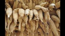 Patricia Brown photo: While hiking along the trails in Nepal we came across these drying corn husks. (Patricia Brown)