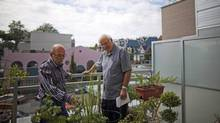 Former B.C. premier and Vancouver mayor Mike Harcourt (R) takes a tour of Robert Godin's (L) garden on the balcony of his suite located in Coast Mental Health Society's Dunbar Apartments in Vancouver, British Columbia, Tuesday, August 14, 2012. Mi (Rafal Gerszak For The Globe and Mail)