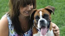Amberly McAteer and Ruby, a five-year-old rescued boxer dog . (Fred Lum/The Globe and Mail)