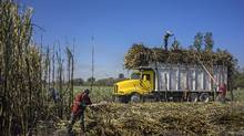 Unrest is brewing among Mexico's agrarian class as looming NAFTA renegotiations threaten the country's sugar industry, upon which an estimated 2.4 million people are dependent for their livelihoods. (Cesar Rodriguez/Bloomberg News)