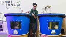The Mississauga Food Bank recently launched AquaGrow Farms, where tilapia is being raised in tanks. (Mark Blinch/THE CANADIAN PRESS)