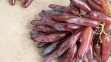 After a decade of development, the Witch Finger grape, from California grower Grapery, is now available in Canada – but just until late September. (Signe Langford)