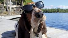 PUPPY LOVE The latest social-media celebs are of the canine variety – such as @deanthebasset with his 160,000 Instagram followers.