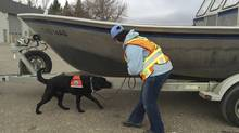 B.C. is thinking about adding sniffer dogs to its detection program for zebra and quagga mussels. Shown here are photos of Alberta's K-9 dogs at work on boats. See story for cutline info. (Alberta Environment and Parks)
