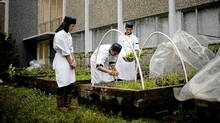 Grade 12 Culinary students from right to left Sophia Lee, Jordan Pham and Victor Bak harvest herbs in the garden at Windermere Secondary School in Vancouver. (Rafal Gerszak For The Globe and Mail)