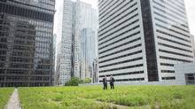 Curtis Sands from the TDBank Group speaks with David Hoffman the General Manager of theToronto-Dominion Centre, on the TD Centre Green Roof downtownTorontoon June 5, 2013. (JENNIFER ROBERTS FOR THE GLOBE AND MAIL)