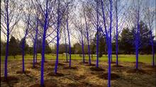 The Vancouver Biennale Blue Trees Site in Richmond, B.C. (Clayton Perry)