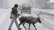 David Hall and Star the reindeer cross the street in Anchorage amid an Alaskan snowstorm. (Bill Roth/Associated Press)