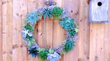 A living wreath made of succulents doesn't require much upkeep. (Karen Robock for The Globe and Mail)