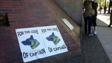 Placards outside provincial court in Vancouver, B.C., on June 4, 2013, express support for Captain, a German Shepherd who was beaten by his owner and left for dead in a Dumpster. (Andrea Woo/The Globe and Mail)
