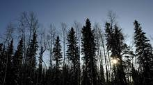Bioenergy is one thing we should be able to agree on when it comes to Canada's remote communities (Fred Lum/The Globe and Mail)