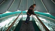 Carol Schmitt inspects salmon in tanks at the Omega Pacific Hatchery on Vancouver Island's Great Central Lake, near Port Alberni, B.C. Ms. Schmitt and her business partner, Bruce Kenny, say their hatchery model would greatly assist B.C.'s salmon fishery. (Simon Hayter/Simon Hayter for The Globe and Mail)