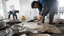 YUEQING, CHINA - MAY 20: Fins are removed as sharks are procesed on May 20, 2011 in Puqi town, Yueqing city of Zhejiang Province, China. Shark fin soup is considered a delicacy in China carrying a symbolic significance of wealth and prestige. (ChinaFotoPress/Getty Images)