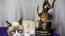 Internet sensation Grumpy Cat strikes a typical pose after winning the lifetime achievement trophy at the Friskies Award Show in New York. (John Minchillo/AP)