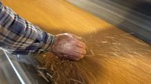 A worker picks up a handful of wheat off the conveyor belt at a grain terminal in Vancouver on Oct. 6, 2011. (BEN NELMS/REUTERS)