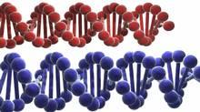Double helix DNA strand. (Monika Wisniewska/iStockphoto)