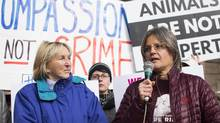 PETA president Ingrid Newkirk, left, listens to a speech by Anita Krajnc, right, who was charged with mischief after giving water to pigs on their way to slaughter, as they demonstrate outside of a Burlington courthouse ahead of closing arguments in her case, Thursday, March 9, 2017 in Burlington, Ont. (Aaron Lynett/THE CANADIAN PRESS)