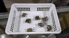 Unregulated marijuana products, like these displayed at a Toronto pot dispensary in March, can contain contaminants. (Fred Lum/The Globe and Mail)
